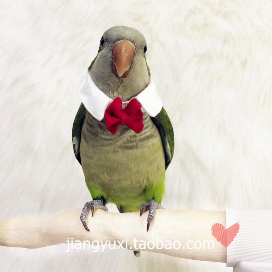 """Ткань персики мечтать думать сделанный на заказ птица ошейники попугай галстук-бабочка поддельные воротник сын """" маленькая ночная песня """""""