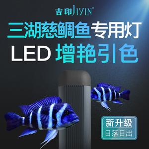 吉印 三湖慈鲷鱼灯专用灯引色灯三湖鱼灯雕鱼鱼缸增艳发色专业灯