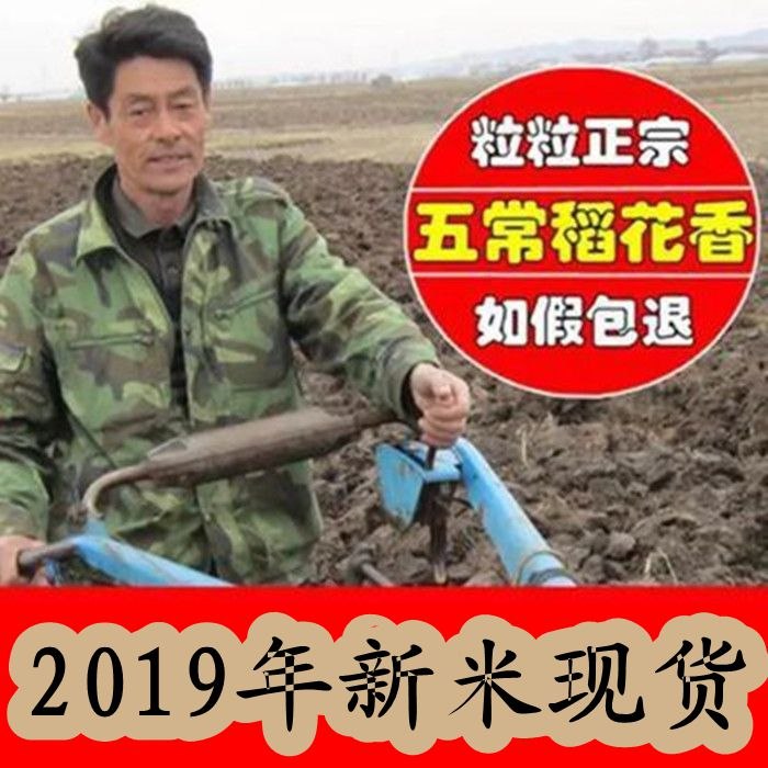 In 2019, new rice in stock is authentic in Wuchang, Heilongjiang, Northeast China