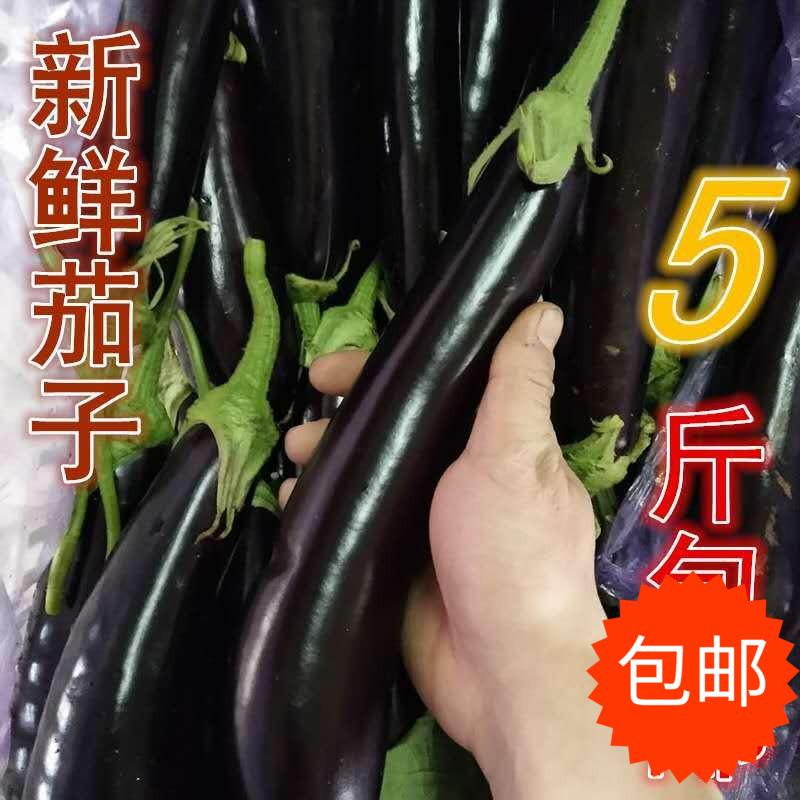 农家自种山东省新鲜蔬菜现摘现发烧烤长茄子 低价促销2500克 包邮