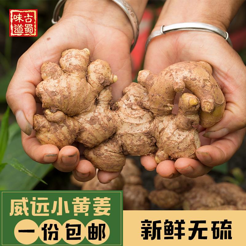 古蜀家 四川威远小黄姜2.5斤包邮现挖新鲜老姜土姜可做生姜红糖水