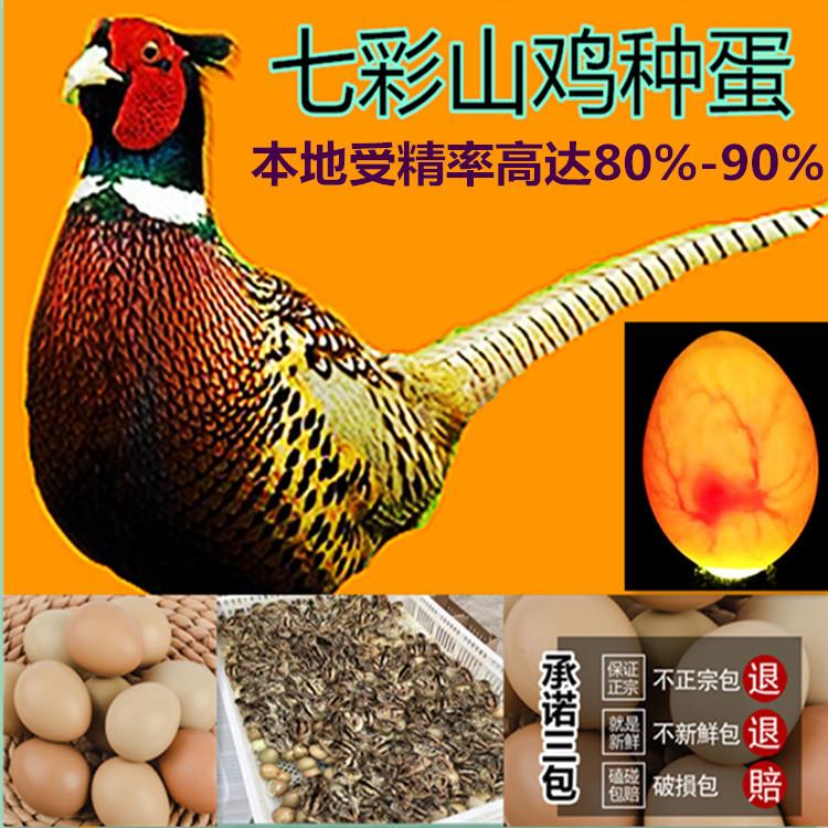 野鸡种蛋【满20枚包邮】新鲜高受精 可孵化小鸡的七彩山鸡蛋 促销
