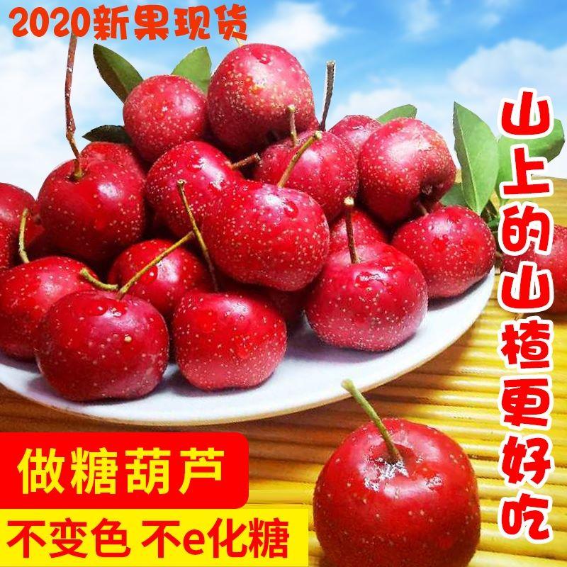 山楂果新鲜水果特级大果糖葫芦原料自然成熟山里红果大金星大五棱