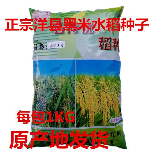 正宗洋县黑稻谷黑米种子水稻高产种子1千克黑米稻种子送资料