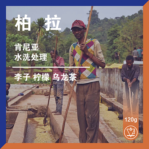 OneDayCoffee柏拉AA肯尼亚水洗红茶感精品手冲咖啡豆120g包装