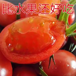 新鲜圣女果5斤包邮千禧樱桃小番茄水果农家西红柿蔬菜