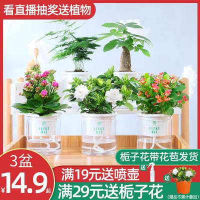 茉莉花盆栽花卉室内栀子花绿萝发财树办公室小绿植驱蚊草多肉植物