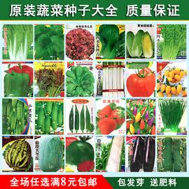 蔬菜种子四季播种阳台庭院盆栽农家辣椒番茄黄瓜韭菜香菜草莓籽图片