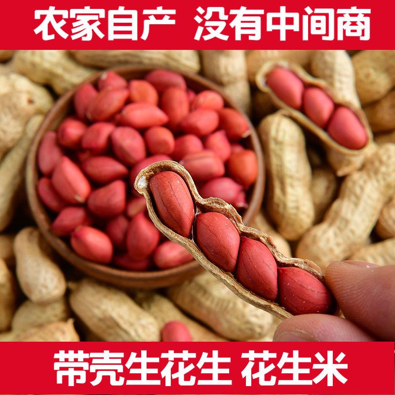 紅皮の落花生は殻の生米の4粒の赤い服の落花生の種を持っています。