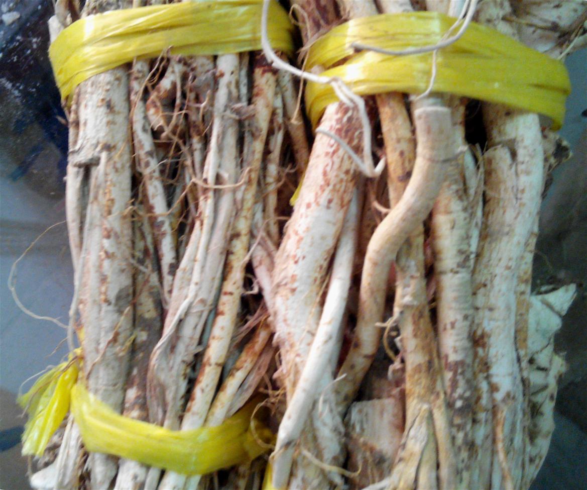 广东煲汤料 河源客家特产野生五指毛桃根 牛奶树根椰香味浓250g