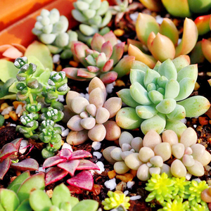 满19元多肉植物组合盆栽防辐射绿植园艺新手练手普货多肉