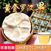 龍脊新鮮低溫脫水黃金羅漢果干果大果桂林特產羅漢果茶花茶袋裝