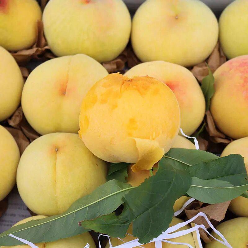 现货现摘奉贤光明锦绣黄桃5斤装 新鲜水果正宗上海黄桃