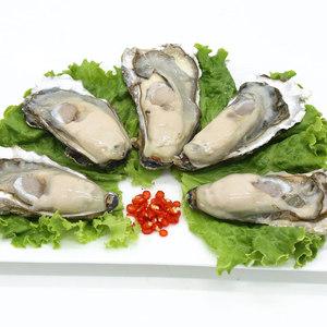 青岛鲜活捕捞半壳海蛎子新鲜冷冻生蚝牡蛎