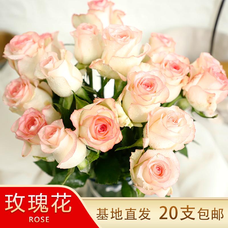 20支家用水养鲜切插花云南昆明玫瑰
