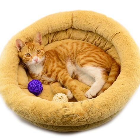 Прекрасные взрывы питомник короткие плюшевые кашемира Тедди VIP pet cat Wo Wo pad пакет почты
