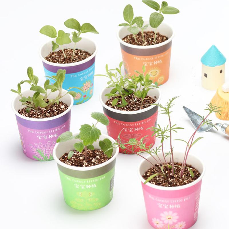 Горшки с растениями Артикул 556926292913