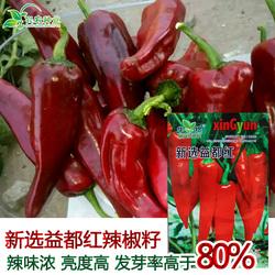 益都红辣椒种子北京红辣椒红干椒香辣超辣春季秋季四季高产盆栽