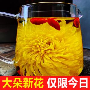 金丝皇菊一朵一杯大朵2020新花菊花茶罐装花茶茶叶泡水喝的菊皇茶