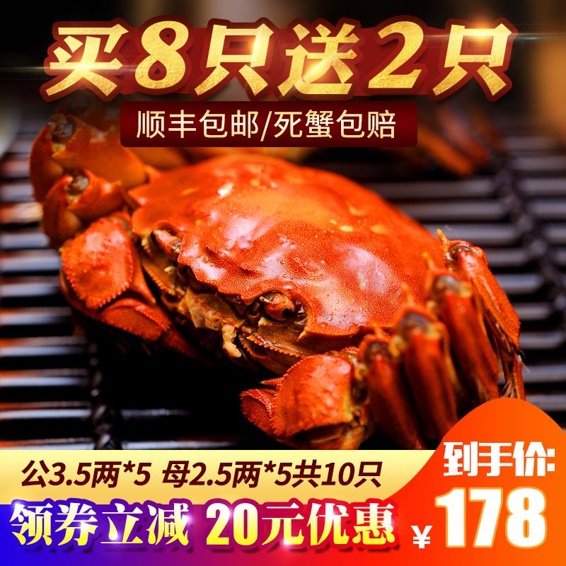 阳澄湖六月黄大闸蟹鲜活现货 特大全公母螃蟹3.5-2.5两10只礼盒装