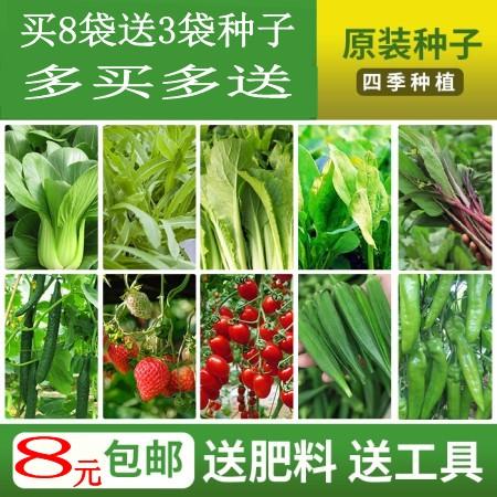 菜籽种子大全四季室内农家小白菜生菜南瓜菠菜春季蔬菜种籽孑套餐