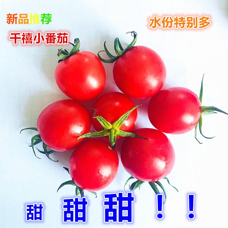 新鲜水果 迷你小番茄 圣女果 千禧果 樱桃番茄 蔬菜水果沙拉 450g