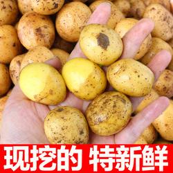 恩施小土豆马铃薯新鲜5斤富硒农家黄心洋芋现挖蔬菜10马铃薯包邮