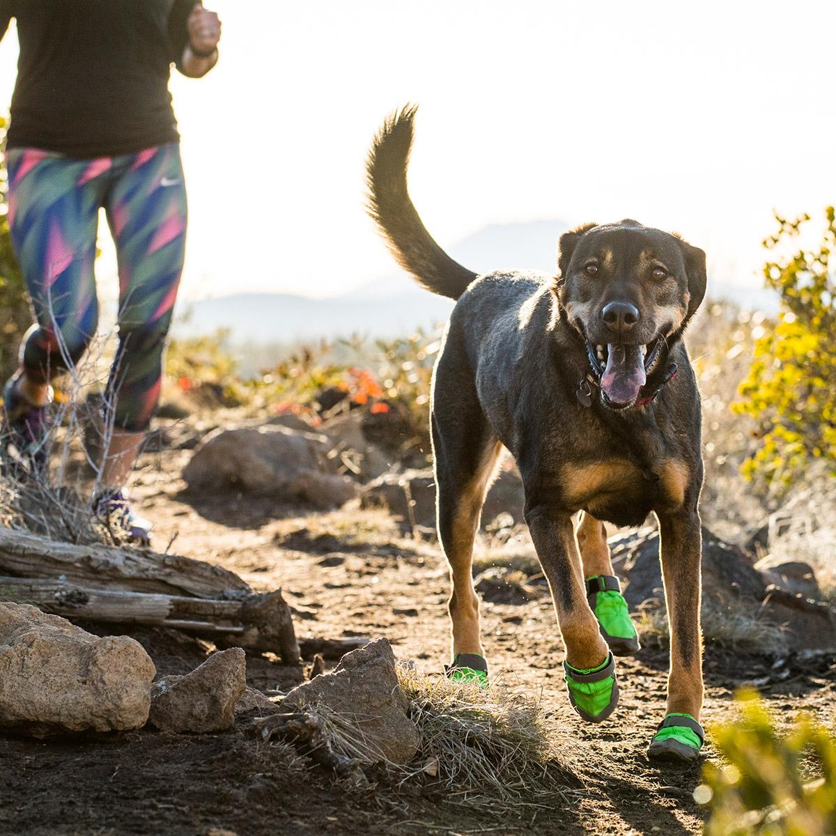 美国拉夫威尔狗狗鞋子萨米特狗狗鞋子时尚运动狗狗鞋进口宠物用品