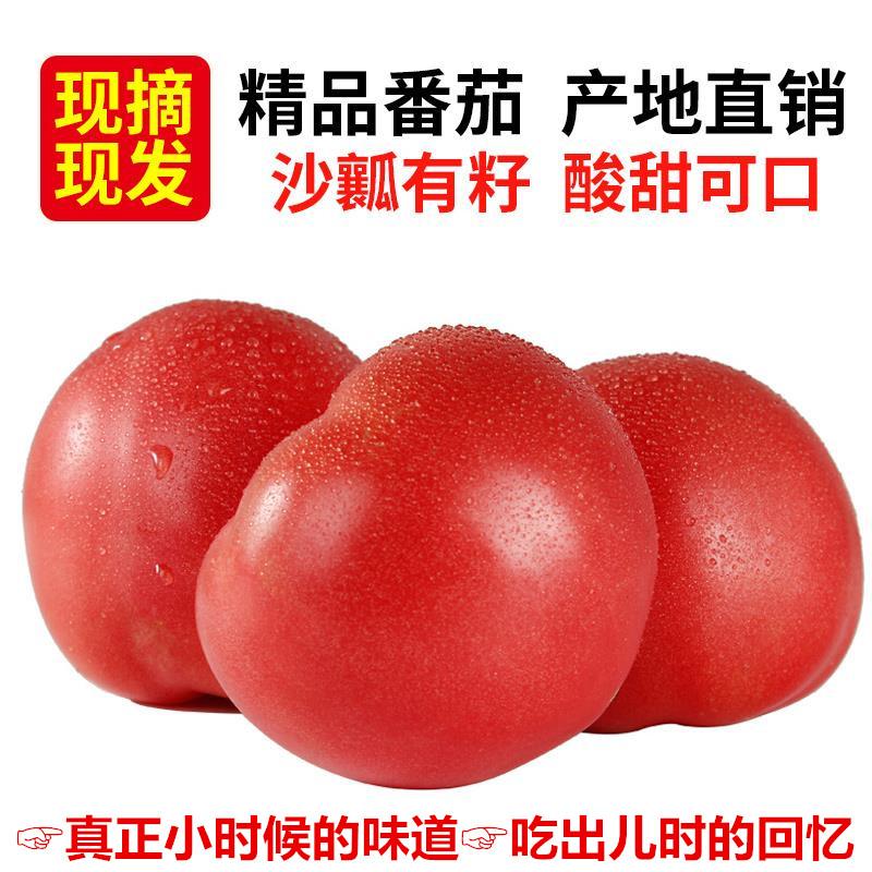 沙瓤自然熟西红柿新鲜水果孕妇儿童绿色蔬菜纯天然番茄 5斤包邮