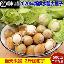 2020年新鲜大榛子新货东鼻生带绿皮水仁水瓤桓仁去皮生榛子500g