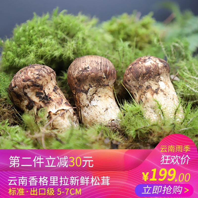 拾蘑菇 香格里拉新鲜松茸 标准出口级 5-7cm500g 云南野生菌包邮