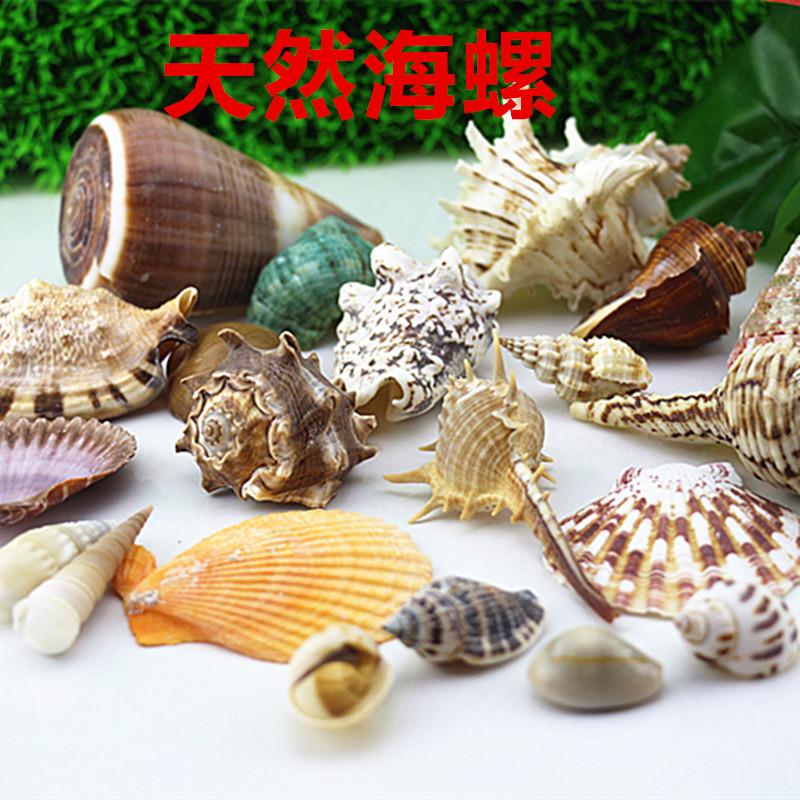 天然海螺贝壳鱼缸造景装饰品卷贝鱼寄居蟹套装小礼物地台摆件多款