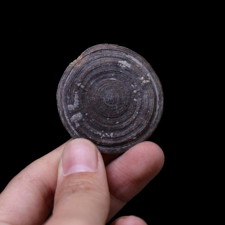 Ископаемые Артикул 596689494605