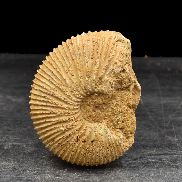 Ископаемые Артикул 619497761999