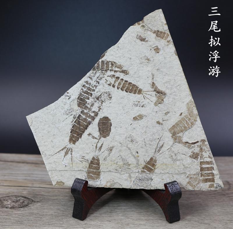 Ископаемые Артикул 556005744623
