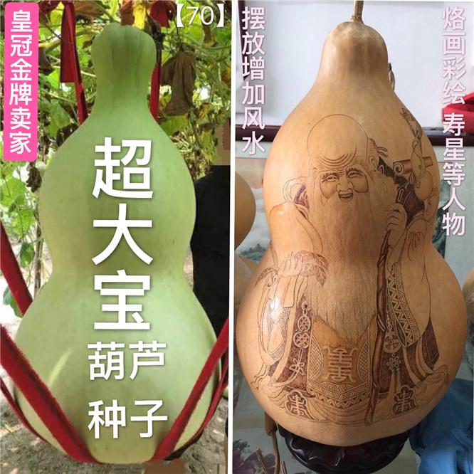 超大宝葫芦种子籽稀有名贵品种【皇冠金牌卖家】本店葫芦种子齐全