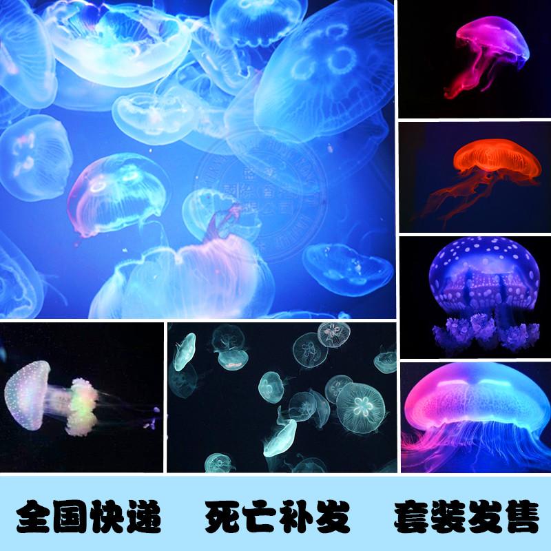 Дополнительные товары для аквариума Артикул 542661245119