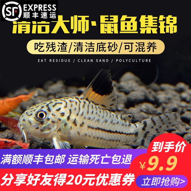 Рыбы Артикул 561092805606