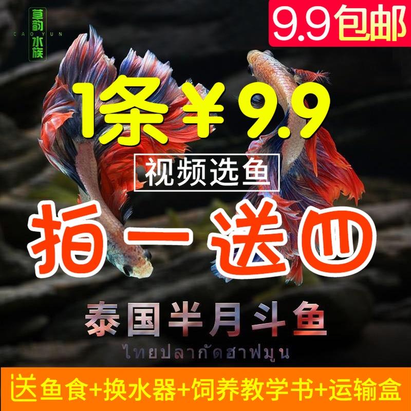 Рыбы Артикул 559896539901