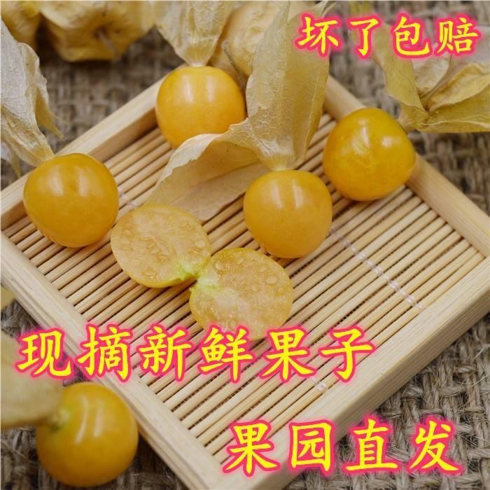 东北姑娘果1斤新鲜水果特产灯笼果黄姑娘果菇娘果水果包邮