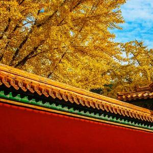 飞猪专线 春节都江堰青城山一日游小团纯玩成都熊猫基地跟团旅游