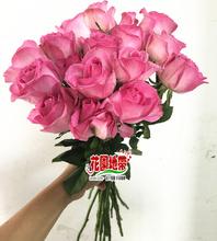 桃红大花朵 糖果玫瑰 生日爱情求婚礼物 家庭办公室婚礼插花顺丰