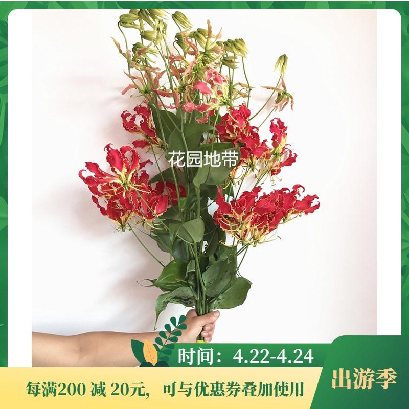 硬货花卉 直飞日本花市进口彼岸花鲜切花 曼珠沙华 嘉兰鲜花 速递