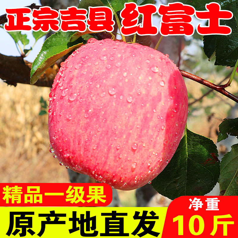 Jixian Red Fuji Apple Hukou Waterfall apple