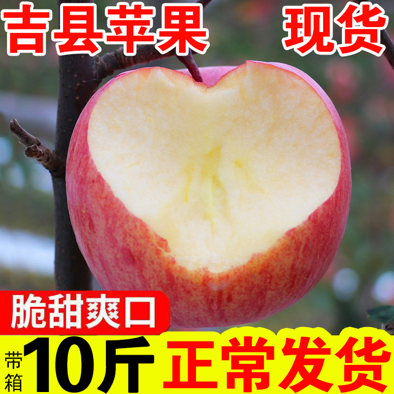 Jixian Red Fuji Apple Shanxi Hukou Apple fresh crisp sweet belt box 10 jin saiaksu ice sugar apple