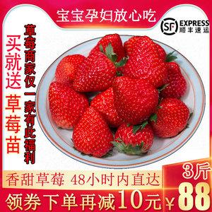 领10元券购买新鲜奶油草莓3斤长丰红颜草莓孕妇水果现摘现发顺丰包邮非丹东99