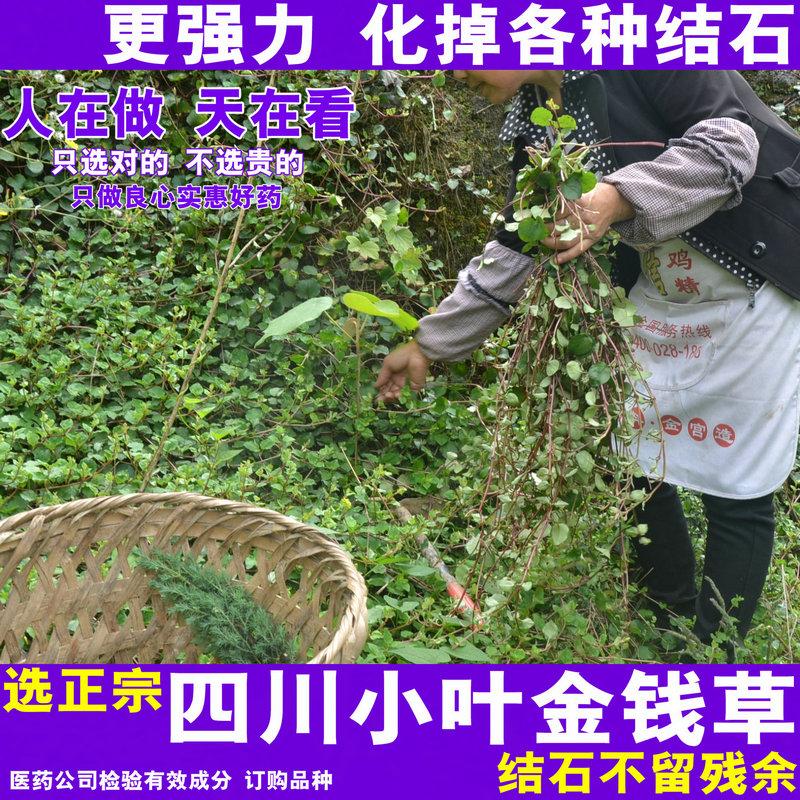2018 новый Деньги, деньги травы, Сычуань подлинной дикой листовки, деньги травы, сушеные китайские лекарственные травы, все виды каменного чая