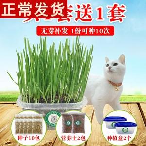 领1元券购买猫草种子猫咪去毛球助消化猫零食