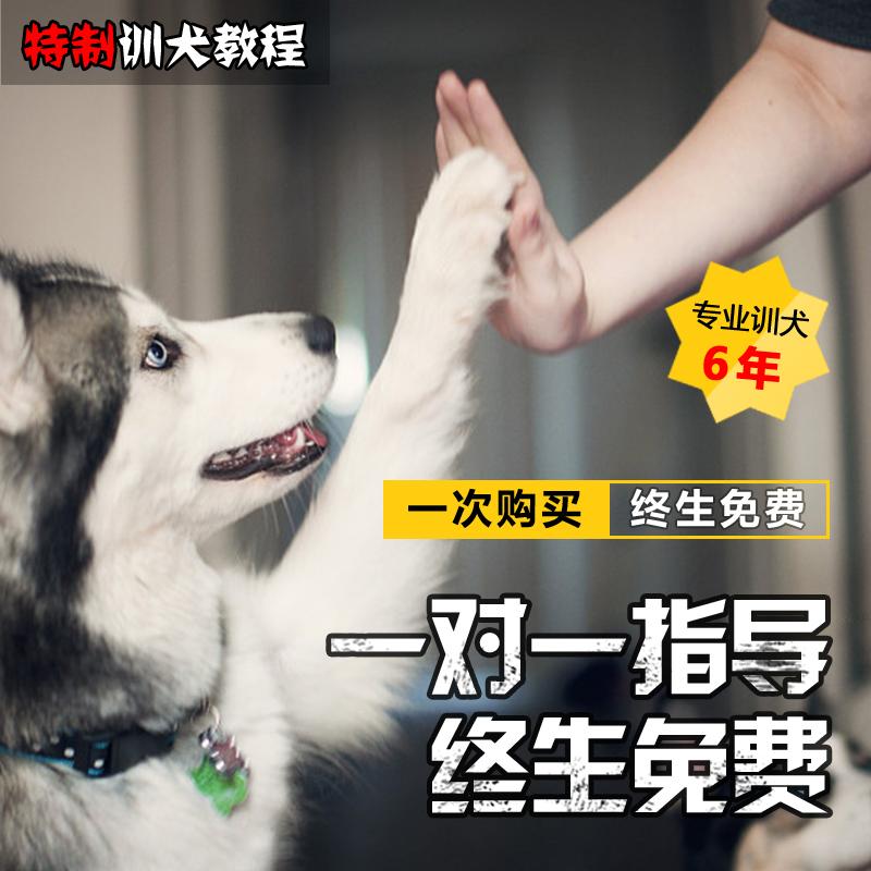 训练宠物狗狗视频教程训犬师一对一培训定点排便上厕所防止乱叫咬