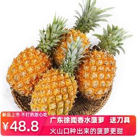 广东徐闻香水菠萝精选A级中果9斤净果当季新鲜水果包邮非海南凤梨